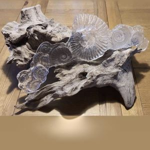 Sandcast Ammonite Sculpture on bogwood