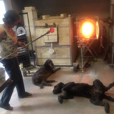 Siddy trying to blow glass with two huge labradoodle dogs lying in front of the gloryhole