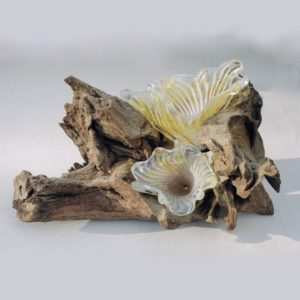 ..Staghorn Fungus Sculpture on Bogwood